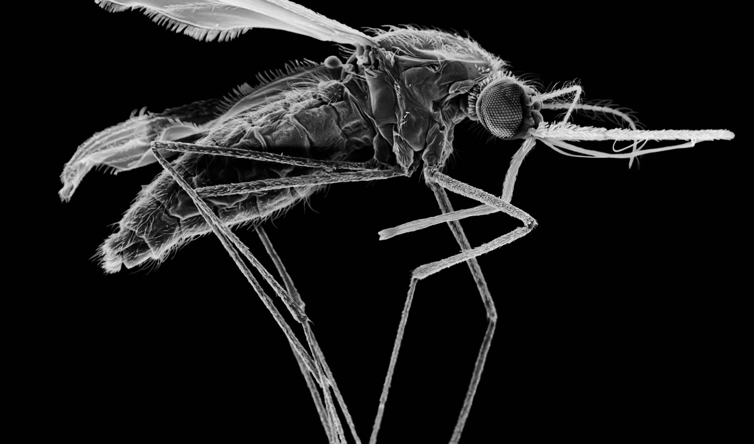 Global fight against malaria, sanger institute case studies, world malaria day